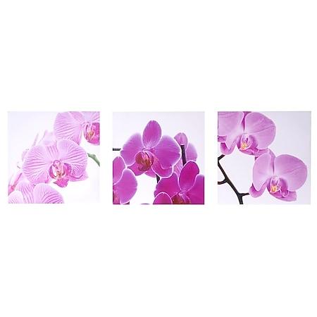 Leinwandbild H376, Wandbild Keilrahmenbild Kunstdruck, 3-teilig 150x50cm ~ Orchidee - Bild 1