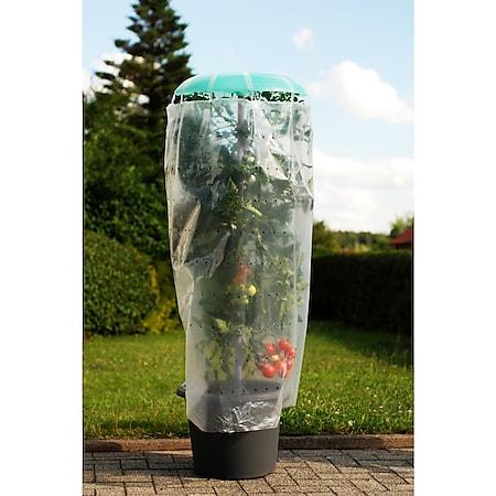 Pflanzhilfe Tomatenhut 3er Set mit Schutzfolie - Bild 1