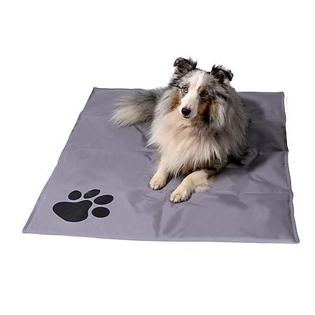 Große Kühlmatte für Hunde, selbstkühlende Haustiermatte mit Pfotenmuster | versch. Farben - Bild 1