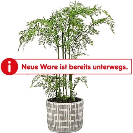 HTI-Living Kunstpflanze Farn im Topf - Bild 1